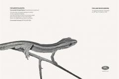 land_rover_coromandel_striped_gecko_1